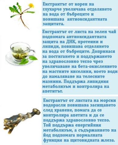 натурални екстракти корен от глухарче зелен чай морски водорасли